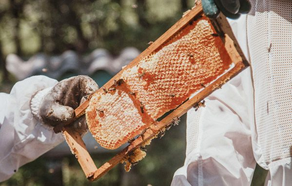 Soutenez le rucher solidaire de Bourrou, projet d'un adhérent AP