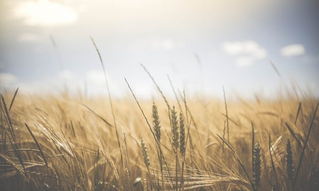 Plaidoyer pour l'installation agricole dans le cadre de la campagne pour les régionales