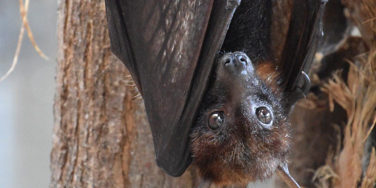 Atlas de la biodiversité: mieux connaitre pour mieux protéger